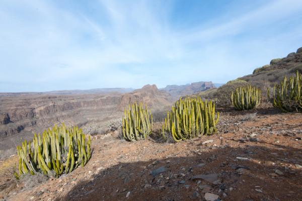 Mundo Aborigen auf Gran Canaria