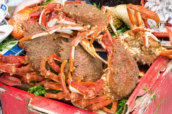 Essaouira - Krabben im Hafen