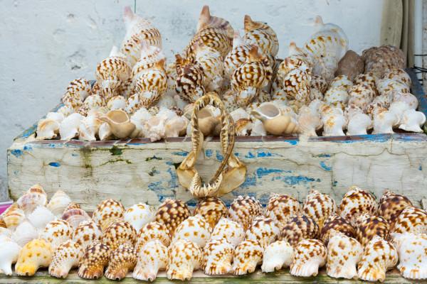 Essaouira - Muscheln im Hafen