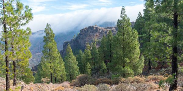 Panoramabild - Poco de las Nives auf Gran Canaria