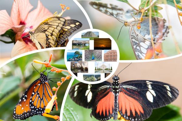 Bilderserie Schmetterlingsgärten Grevenmacher und Sayn