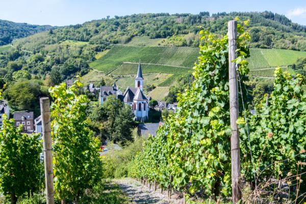 Weingut in Traben Trarbach