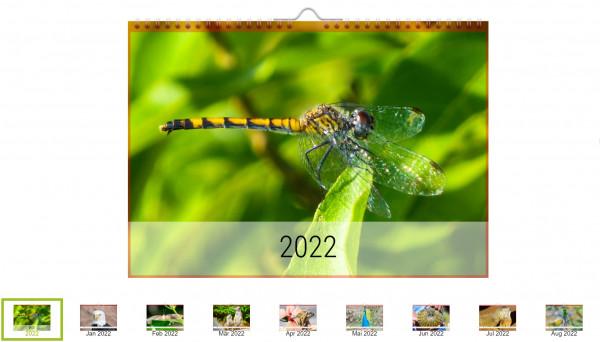 Foto-Kalender Tiere